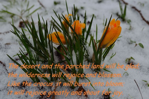 flowers-and-snow (1)