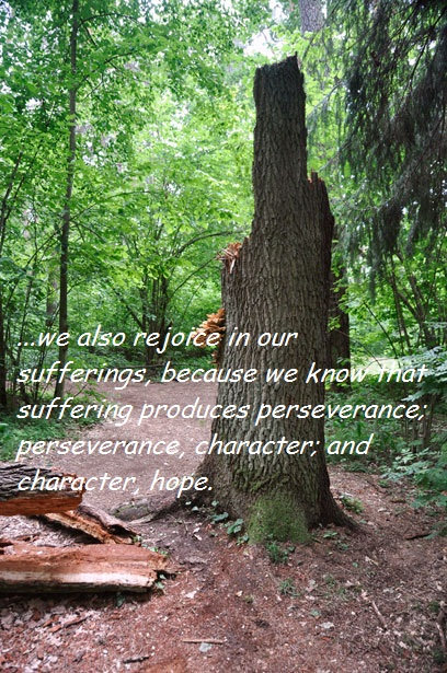 pien-drzewa