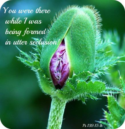 poppy-287037_640