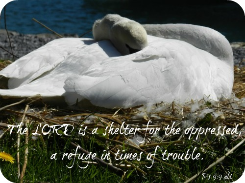 swan-206944_640