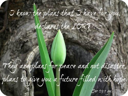 tulip-200514_640 (1)