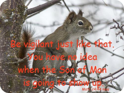 squirrel-300223_640