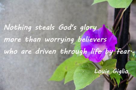 morning-glory-942143_640