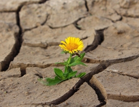 https://pixabay.com/en/flower-life-crack-desert-drought-887443/